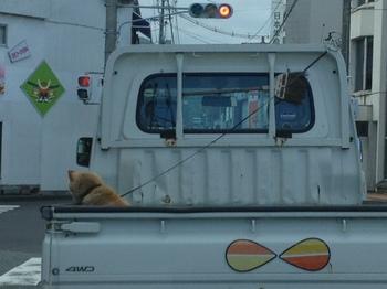 荷台犬2.jpg